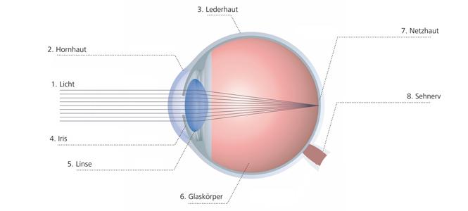 Augenkrankheiten Übersicht Auge