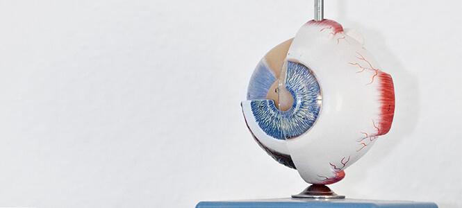 Diagnose Aufbau Auge Grüner Star